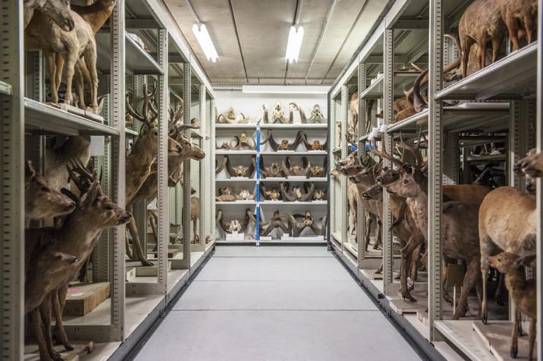 NKsouslemuseum01